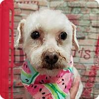 Adopt A Pet :: Kylie - Plainfield, IL