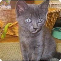 Adopt A Pet :: Ivan - Portland, ME