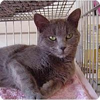 Adopt A Pet :: Carly - Modesto, CA