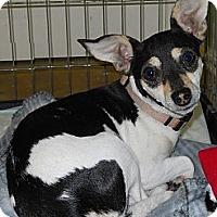 Adopt A Pet :: Dulcinea - Oklahoma City, OK