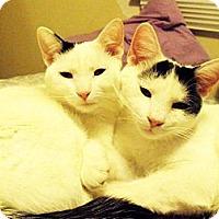 Adopt A Pet :: Bailey & Becca - Xenia, OH