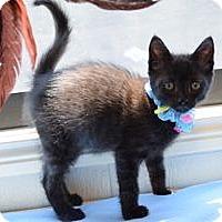 Adopt A Pet :: Matthew - Colorado Springs, CO