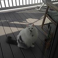 Adopt A Pet :: CP - NJ - Cody - Blairstown, NJ