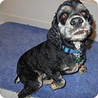 Adopt A Pet :: Smokie -Adopted! - Kannapolis, NC