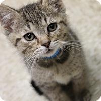 Adopt A Pet :: Keats - Medina, OH