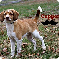 Adopt A Pet :: Copper - Marion, KY