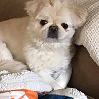 Adopt A Pet :: Belle - Georgetown, CO