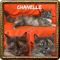 Adopt A Pet :: Chanelle - Jeffersonville, IN