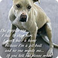 Adopt A Pet :: Allie - Alamogordo, NM
