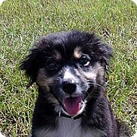 Adopt A Pet :: Miami - Available SOON - Savannah, GA