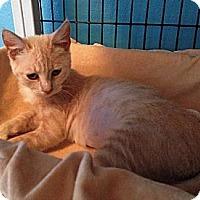 Adopt A Pet :: Blossom - Deerfield Beach, FL