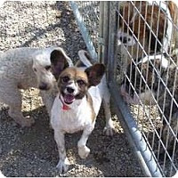 Adopt A Pet :: Kelly ADOPTION PENDING!! - Antioch, IL