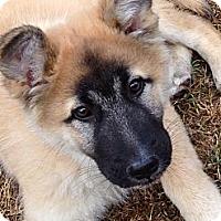 Adopt A Pet :: BERT - Torrance, CA