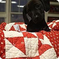 Adopt A Pet :: Frank - Windham, NH