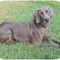 Adopt A Pet :: Blue  **ADOPTED** - Eustis, FL