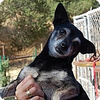 Adopt A Pet :: Schooner - Creston, CA