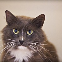 Adopt A Pet :: Bravo - Lincoln, NE
