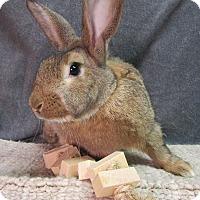 Adopt A Pet :: Calloway - Newport, DE