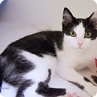 Adopt A Pet :: Doran - Merrifield, VA