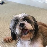 Adopt A Pet :: Barnaby - Grafton, MA