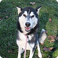 Adopt A Pet :: Sage - Augusta County, VA