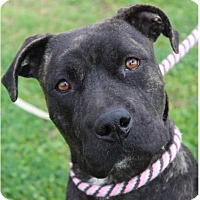 Adopt A Pet :: BETTY/Low fees, altered - Red Bluff, CA