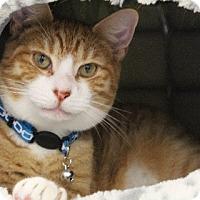 Adopt A Pet :: Avery (AW) 8.19.16 - Orlando, FL