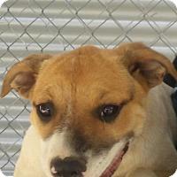 Adopt A Pet :: Hansel - Patterson, NY