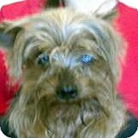 Adopt A Pet :: Otis - Martinsburg, WV