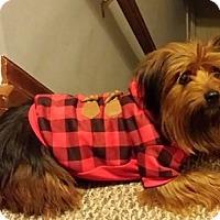 Adopt A Pet :: Wookie - Hamilton, ON