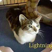 Adopt A Pet :: Lightening - Indianapolis, IN