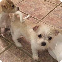 Adopt A Pet :: Eli - Flower Mound, TX