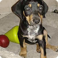 Adopt A Pet :: Tommy - Tampa, FL