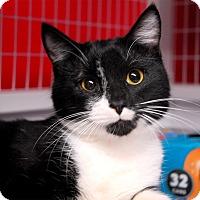 Adopt A Pet :: Reegan - Winchendon, MA