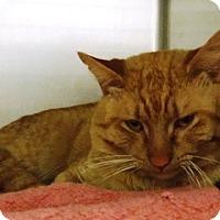 Adopt A Pet :: Morris - Redding, CA