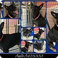 Adopt A Pet :: NITRO - SAN ANTONIO, TX