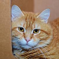 Adopt A Pet :: Crimson - East Brunswick, NJ
