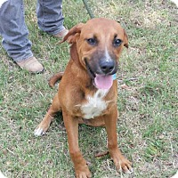 Adopt A Pet :: Buddy - Livingston, TX