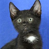 Adopt A Pet :: Cayman - Winston-Salem, NC