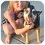 Photo 3 - Shiba Inu Mix Dog for adoption in Cincinnati, Ohio - Lucky