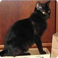 Adopt A Pet :: Esme - Portland, OR
