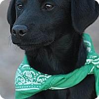 Adopt A Pet :: MIRANDA - Glastonbury, CT