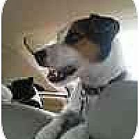 Adopt A Pet :: Danny in Houston - Houston, TX
