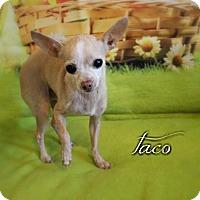 Adopt A Pet :: Taco - Benton, LA