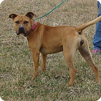 Adopt A Pet :: JEWELL - Cameron, MO
