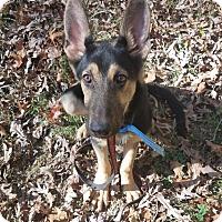 Adopt A Pet :: Ricky - Louisville, KY