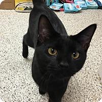 Adopt A Pet :: Sammy - Siler City, NC
