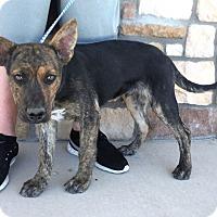 Adopt A Pet :: Lucas - Artesia, NM