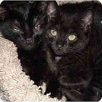 Adopt A Pet :: Dash - Riverside, RI