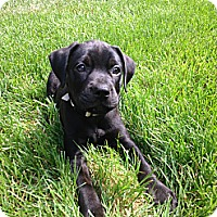 Adopt A Pet :: Baby Jack - Marlton, NJ